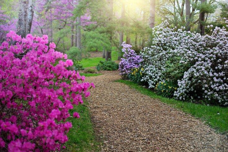 Ścieżki w ogrodzie z kory