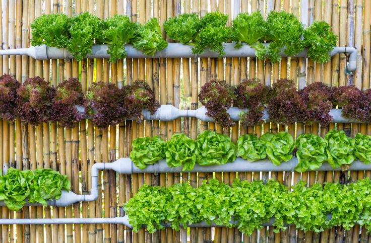 Jak dbać o ogród wertykalny