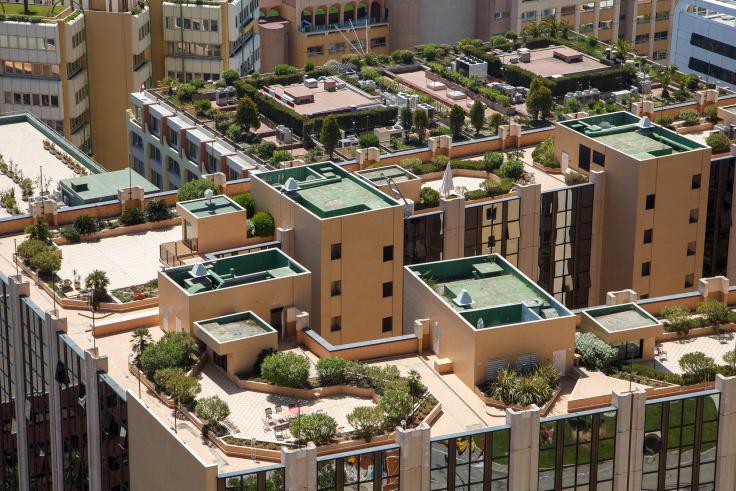Zielony dach intensywny