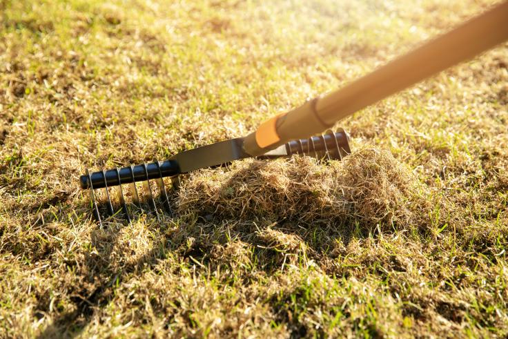 Wertykulacja trawnika ogrodowego