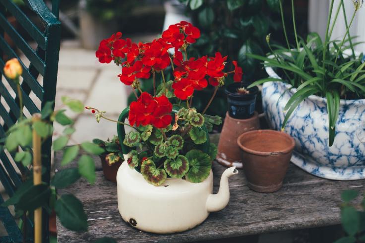 Jak ciekawie zaaranżować ogród