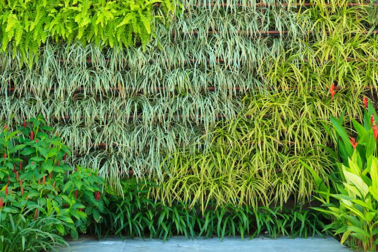 Pomysł na ogród wertykalny